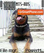 Doggy 03 es el tema de pantalla