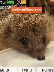 Скриншот темы Hedgehog