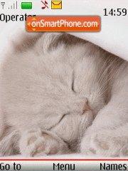 Kitten Sleep theme screenshot