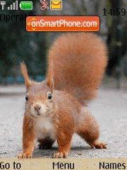 Squirrel theme screenshot