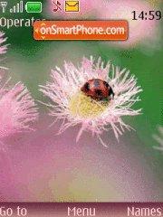 Lady-Bug Theme-Screenshot