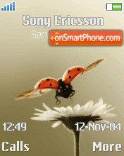 Fly Ladybug theme screenshot