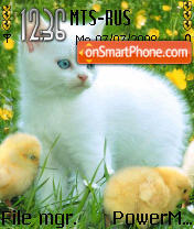 Cat n Chicks es el tema de pantalla
