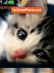 Cat Theme-Screenshot
