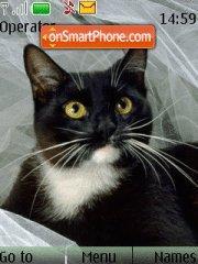 Black Cat tema screenshot