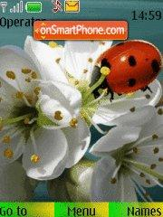 Ladybird tema screenshot