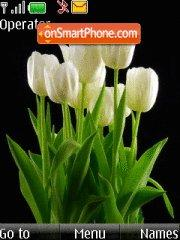 White Tulips theme screenshot
