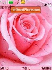 Pink Roses Drops theme screenshot