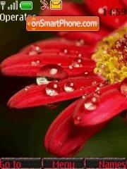 Flower Drops tema screenshot