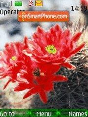 Cactus theme screenshot