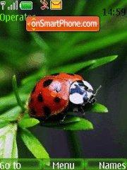 Ladybug es el tema de pantalla
