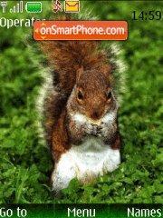Squirrel tema screenshot