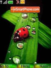 Ladybird drops theme screenshot