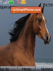 Horses theme screenshot