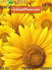 Скриншот темы Sunflower