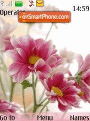 Chrysantemem theme screenshot
