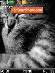 Grey Cat es el tema de pantalla