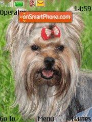 Joksirski Terrier theme screenshot