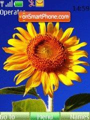 SunFlower 04 theme screenshot