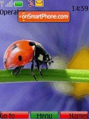 Ladybird theme screenshot