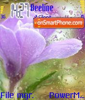 Beautiful Flowers theme screenshot