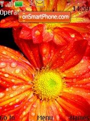 Скриншот темы Red Flower