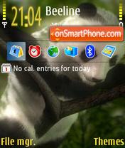 Panda 08 es el tema de pantalla