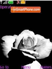 Black and White Rose theme screenshot