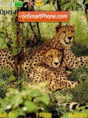 Cheetahs theme screenshot