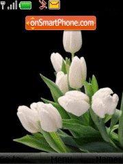 White tulips es el tema de pantalla
