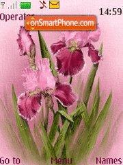 Pink Iris theme screenshot