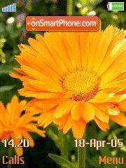 Orange Flower es el tema de pantalla