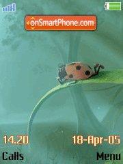 Ladybird es el tema de pantalla