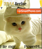 Cat With Piggy Cap theme screenshot