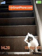 Cats es el tema de pantalla