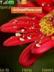 Скриншот темы Water Drops at Flowers