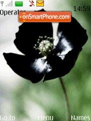 Siyah gelincik Black Poppies theme screenshot