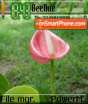 Tulip 01 theme screenshot
