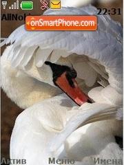 Swans es el tema de pantalla