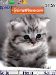 Sweet Cat 01 es el tema de pantalla
