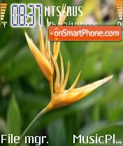 Exotic Flower es el tema de pantalla