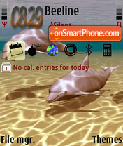 Dolphins Theme theme screenshot