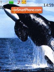 Killer Whale theme screenshot