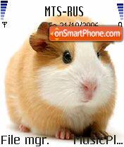 Guinea Pig es el tema de pantalla