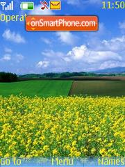 Brassica rapa flowers es el tema de pantalla