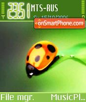 Lady-Bug es el tema de pantalla
