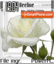 White Rose 02 es el tema de pantalla