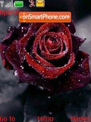Rose Drops theme screenshot