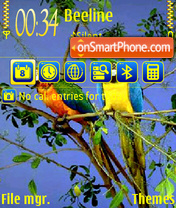 Parrot 02 theme screenshot