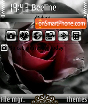 Rose 15 es el tema de pantalla